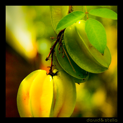 Carambola {Star fruit}