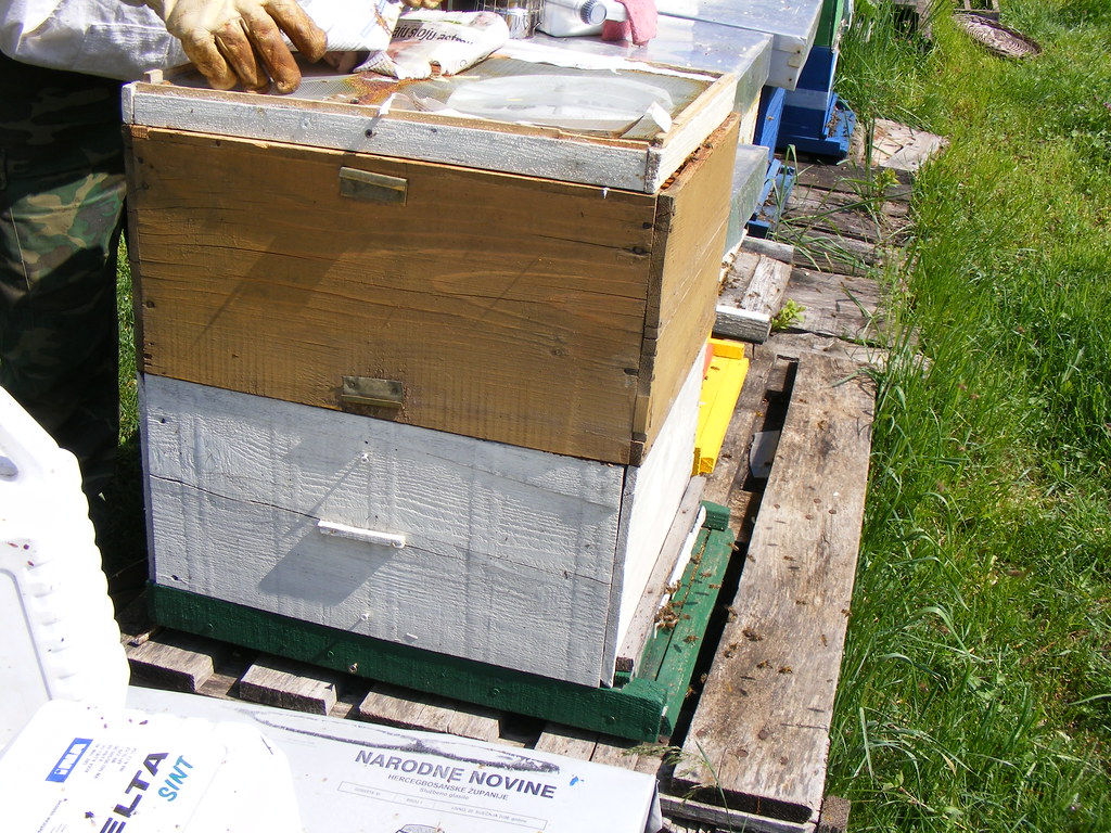 Bees Spring cleaning (35)