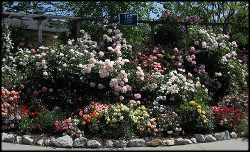 2504_rosegarden