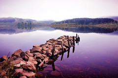 Tree be gone (Stuart Stevenson) Tags: trees mist mountain colour reflection water canon scotland sticks still rocks canon300d stones jetty earlymorning calm stuart glen homecoming serene loch trossachs tranquil breathless polariser lochard homecomingscotland stuartstevenson stuartstevenson