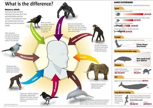 ludzie a zwierzęta