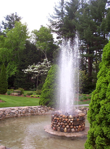 fountain with dogwood