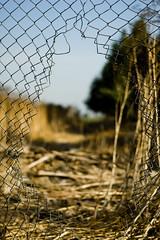 I Want to Break Free. (Malinkrop) Tags: chile santiago libertad 50mm jaula reja reflex wire nikon dof bokeh free cage jail f18 dslr deepoffield chw 50mmf18 alambre profundidaddecampo d40 50mmf18af nikond40