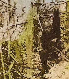 TARZAN OF THE APES (1918) lobby card detail
