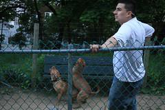 Dog Rape 4 (Venessa Nina) Tags: dog dogs photography idea bad run rape queens breeding stupid mating nina idiots dogrun morons pitbulls venessa fivefootmohawk venessaninaphotography