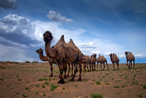 Gobi Desert 29