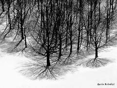 Ombre (Marioleona) Tags: shadow bw white snow black ice ombra mario neve bianco nero ghiaccio mariobrindisi cainapoli