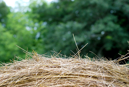 top of a bale of hay (my favorite)