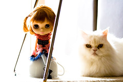 My version: Alice, the mug and the cat