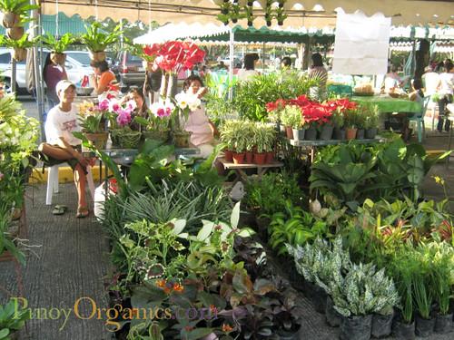 AAV Market-plants