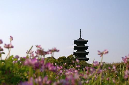 れんげ+五重塔 #3