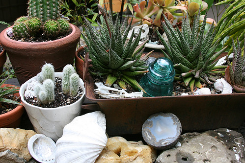geodes, bones and succulents