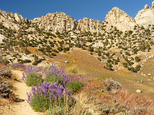 "Lupine Trail to Owens Peak -- For Kathy with ""Green Blessings"""