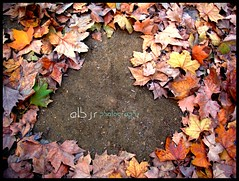Autumn Leaves (Hojas de Otoño) (Alberto Jiménez Rey) Tags: autumn colour love leaves de hojas san heart amor colores alberto manuel cadiz rey fernando lucia otoño martinez corazon tapia jimenez albjr albjr7 alylu