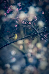 Eye contact (taka_Q) Tags: flower birds 春 野生生物 花・草木