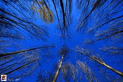 No hay salida // No way out (Hunter.) Tags: barcelona blue sky santafe azul forest canon spain interior inner bosque cielo canon350d hunter 1020mm cornered ramas montseny branchs acorralado sortidazz parquenacionaldelmontseny parknationalofmontseny kddmontsenysortidazz