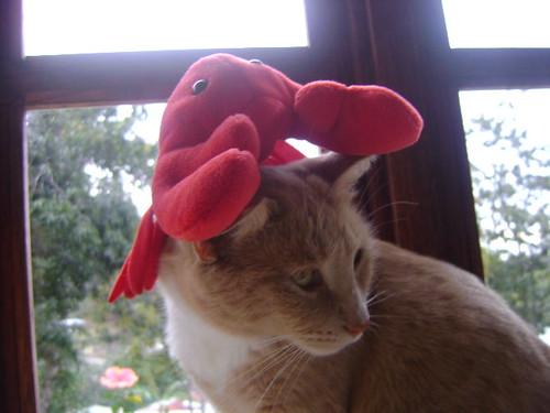 STellaluna + Lobster