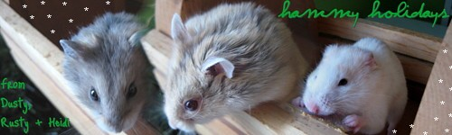 heidithehamster_Stitched_004_08