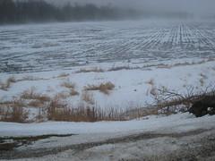 Foggy Field (rocket_sauce) Tags: field fog roadside treeline