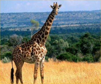 Giraffes-dont-exist.jpg