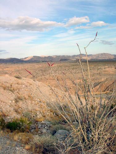 50 Desert Blooms (E)