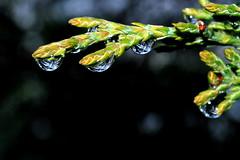 ode alla pioggia :-( (luporosso) Tags: naturaleza nature rain drops natura drop gotas raindrops pioggia gocce naturalmente waterforms bej mywinners naturaincontaminata citrit natureselegantshots