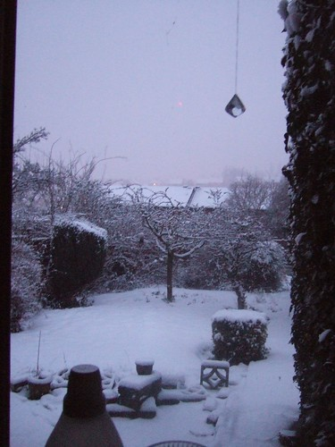 snow feb 5 2009 012