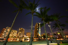 Rainbow Tower (ACphoto-Hawaii) Tags: night hawaii waikiki palm palmtree moonlight honolulu hotels resorts hiltonhawaiianvillage rainbowtower hiltonlagoon hiltonhotels