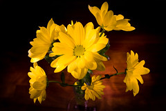 20090216 Yellow Flower (SteenT) Tags: flower 365 projekt lightpaint steentalmark talmark
