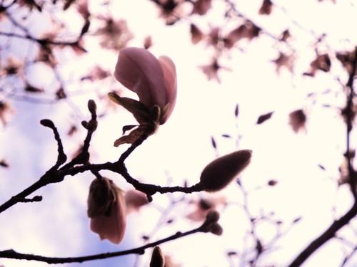 Pink flutter