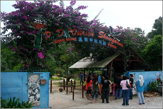 pd-ostrich-farm