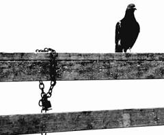பாரதியின் கவிதைகள் : ஞானப் பாடல்கள் : விடுதலை வேண்டும்