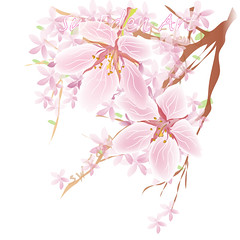 Flower Cherry Blossom (The SW Eden ( )) Tags: flower cherry blossom sweden pinkflower