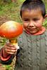 mmm si fuera caramelo...  (Amanita cæsaria) (David Morales) Tags: mushroom méxico veracruz hongo davidmorales frutosdelbosque