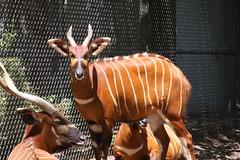 Louisville Zoo 047 (cellophane303) Tags: louisvillezoo