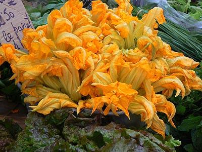fleurs de courgette.jpg