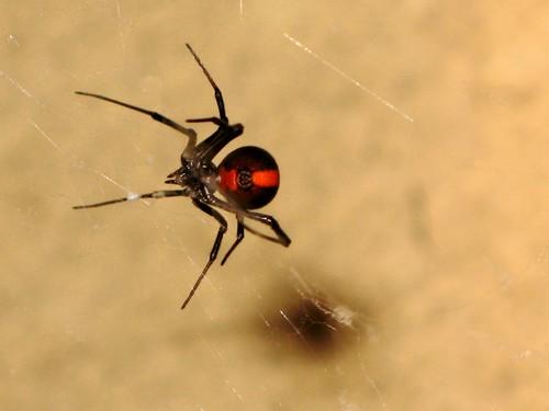 A Venomous Spider Bit a Guy's Junk in a Port-a-Potty