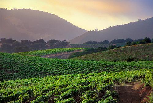 Vineyards, Sonoma Valley