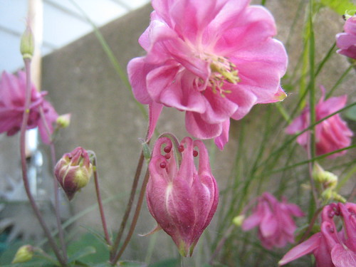 Flowers (839)