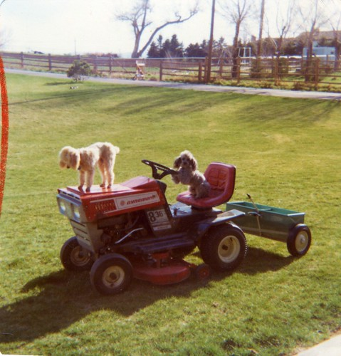 Carmel and Smokey on Deirdre's family's riding mower - sometime in 1976