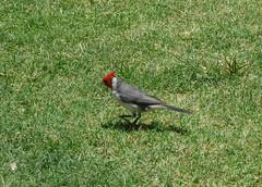 Aloha bird.
