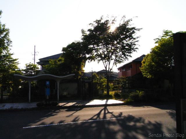 The Setting Sun Through the Trees in Sendai