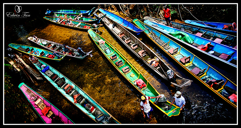 1st place in year 2009 Treasures of the Rainforests Photography Conference and Challenge