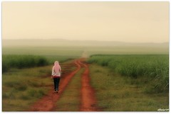 my journey (affacino) Tags: sky sunrise walking sony hijab malaysia plantation alpha sugarcane ladang perlis vanish a300 tebu