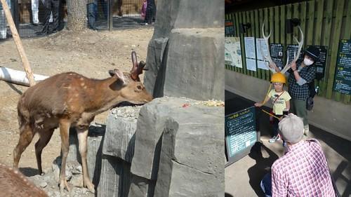 你拍攝的 旭山動物園3。