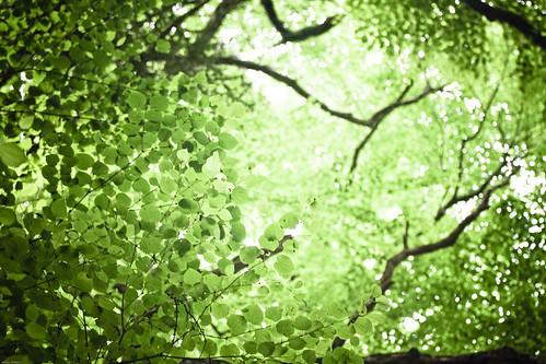 16187 : Tree where god stays