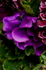 1004 bouquets #12