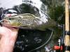 """Pêche de la truite au toc aux appâts naturels dans les Pyrénées © Lionel ARMAND • <a style=""""font-size:0.8em;"""" href=""""http://www.flickr.com/photos/49881551@N02/4585153650/"""" target=""""_blank"""">View on Flickr</a>"""