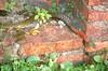 Red-necked Keelback Snake Eating Toad (cowyeow) Tags: china food asian asia feeding eating reptile snake amphibian guangdong toad snakes herp reptiles herps venomous venom herpetology bufo snakeeating snakefeeding herping snakehunting rhabdophis chinasnake subminiatus hongkongreptiles hongkongsnake chinareptile animalattacking
