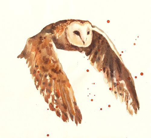 alison-owl3